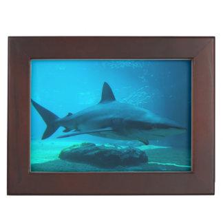 Dusky Shark (Carcharhinus Obscurus), Ushaka Keepsake Box