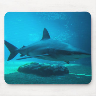 Dusky Shark (Carcharhinus Obscurus), Ushaka Mouse Mat