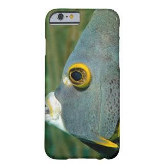 Dutch Antilles, Bonaire, Underwater close-up Barely There iPhone 6 Case
