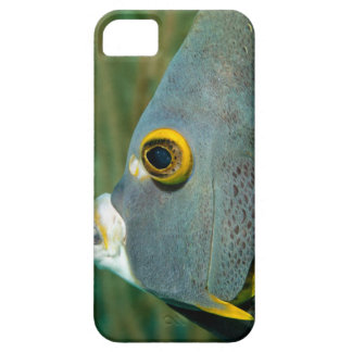 Dutch Antilles, Bonaire, Underwater close-up iPhone 5 Case