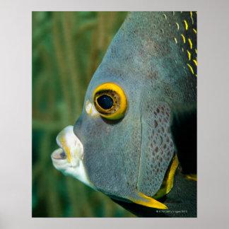 Dutch Antilles, Bonaire, Underwater close-up Poster