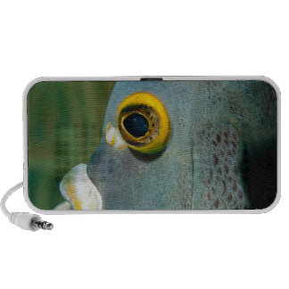 Dutch Antilles, Bonaire, Underwater close-up Laptop Speaker