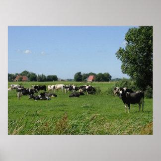 Dutch Cows in Meadow Farm Poster