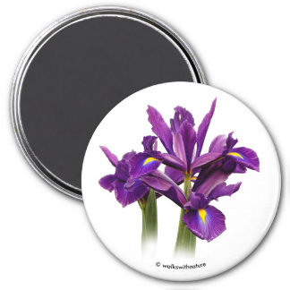 Dutch Iris Purple Sensation Magnet