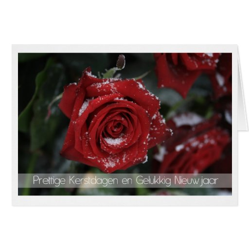 dutch Merry Christmas-Happy New Year snowy red ros Card