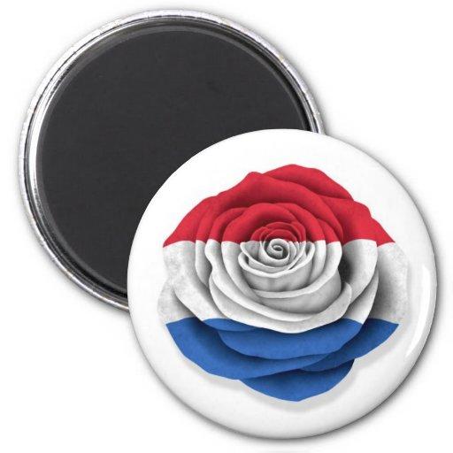 Dutch Rose Flag on White Fridge Magnets