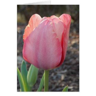 Dutch Tulip Card