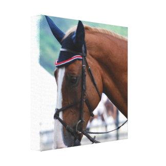 Dutch Warmblood Horse Canvas Print