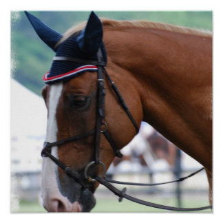 Dutch Warmblood Horse Poster