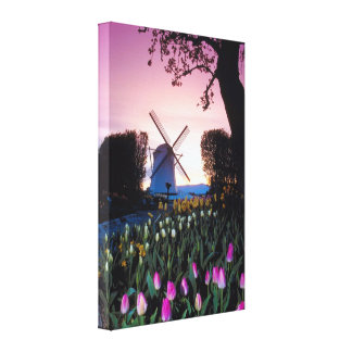 Dutch Windmill at Sunset in Holland Canvas Print