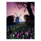 Dutch Windmill at Sunset in Holland Poster