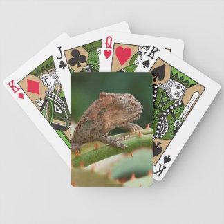 Dwarf Chameleon (Brookesia Exarmata), Algoa Bay Bicycle Playing Cards