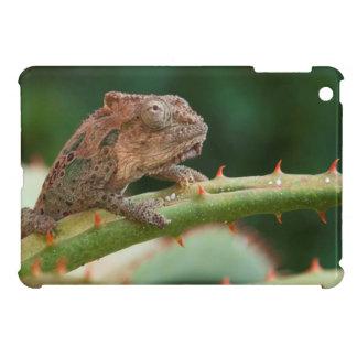 Dwarf Chameleon (Brookesia Exarmata), Algoa Bay Cover For The iPad Mini