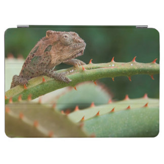 Dwarf Chameleon (Brookesia Exarmata), Algoa Bay iPad Air Cover