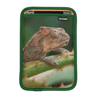 Dwarf Chameleon (Brookesia Exarmata), Algoa Bay iPad Mini Sleeve