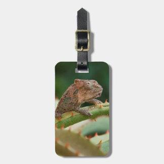 Dwarf Chameleon (Brookesia Exarmata), Algoa Bay Luggage Tag