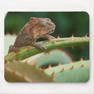 Dwarf Chameleon (Brookesia Exarmata), Algoa Bay Mouse Pad