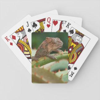 Dwarf Chameleon (Brookesia Exarmata), Algoa Bay Playing Cards