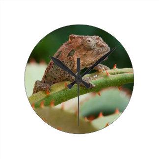Dwarf Chameleon (Brookesia Exarmata), Algoa Bay Round Clock