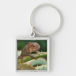 Dwarf Chameleon (Brookesia Exarmata), Algoa Bay Silver-Colored Square Key Ring