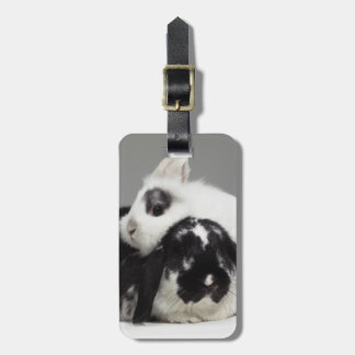 Dwarf-eared rabbit leaning over lop-eared luggage tag