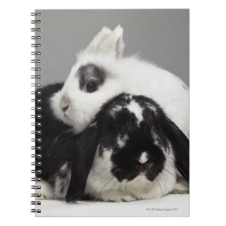 Dwarf-eared rabbit leaning over lop-eared note books