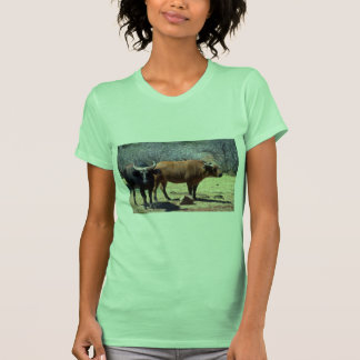 Dwarf Forest Buffalo pair showing red and black ph T-shirts