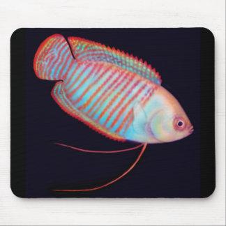 Dwarf Gourami Tropical Fish Mousepad