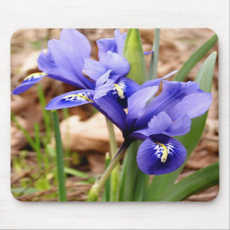 Dwarf Irises mousepad