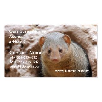 Dwarf Mongoose Business Card Template