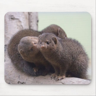 Dwarf Mongoose Kiss Mouse Pad