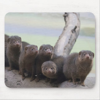Dwarf Mongoose Pack Mouse Pad