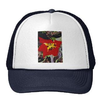 Dwarf tulip mesh hat