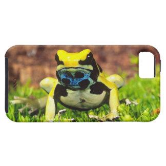 Dyeing Poison Frog, Dendrobates tinctorius, Case For The iPhone 5