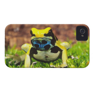 Dyeing Poison Frog, Dendrobates tinctorius, Case-Mate iPhone 4 Case