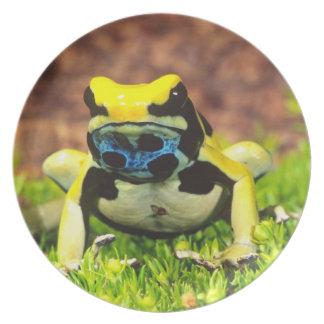 Dyeing Poison Frog, Dendrobates tinctorius, Dinner Plates