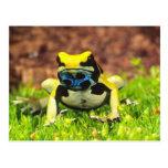 Dyeing Poison Frog, Dendrobates tinctorius, Postcard