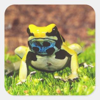 Dyeing Poison Frog, Dendrobates tinctorius, Square Sticker