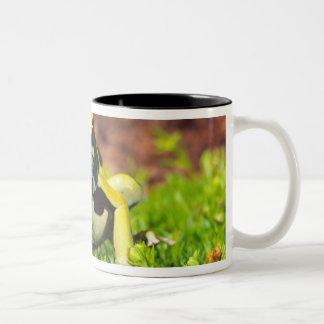Dyeing Poison Frog, Dendrobates tinctorius, Two-Tone Coffee Mug