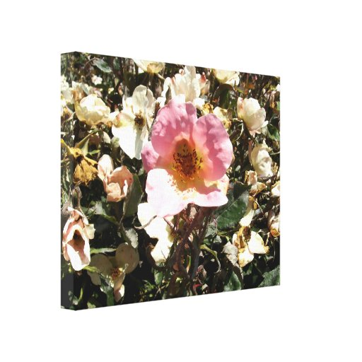 Dying Pink Rose Gallery Wrap Canvas