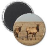 E0001 Bull Elk Fridge Magnet