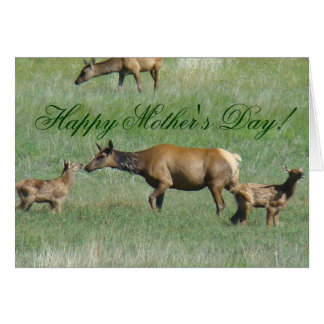 E0003 Cow Elk and Calves Greeting Card