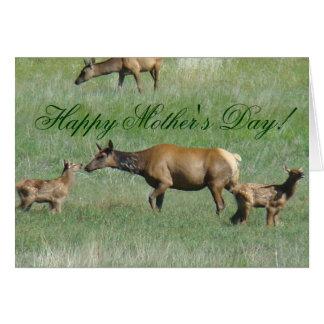 E0003 Cow Elk and Calves Greeting Card