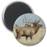 E0004 Bull Elk Magnets