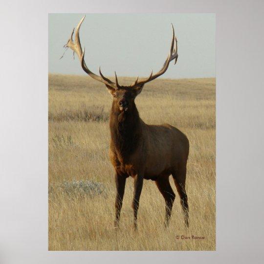 E0013 Bull Elk Poster