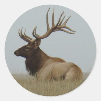 E0015 Bull Elk Classic Round Sticker