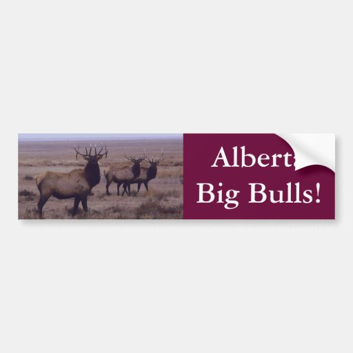 E0019 Bull Elk drop tines Bumper Sticker