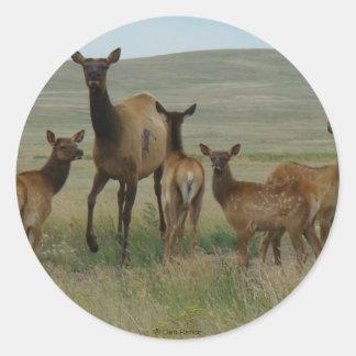 E0044 Cow Elk and Calves Round Sticker