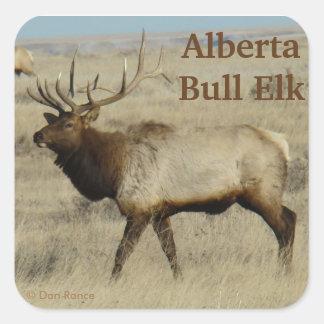 E0055 Bull Elk Square Sticker