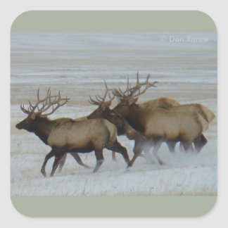 E0064 Bull Elk Running Square Sticker
